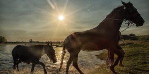 konji-dunav-vreme-vrucina-temperature-prognoza-temperatura_660x330